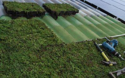 Une toiture végétalisée même sur forte pente