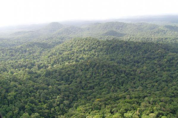 Certification PEFC de la forêt guyanaise