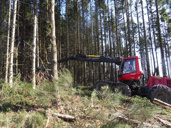 Le salon du bois et de la forêt en Auvergne donne rendez-vous