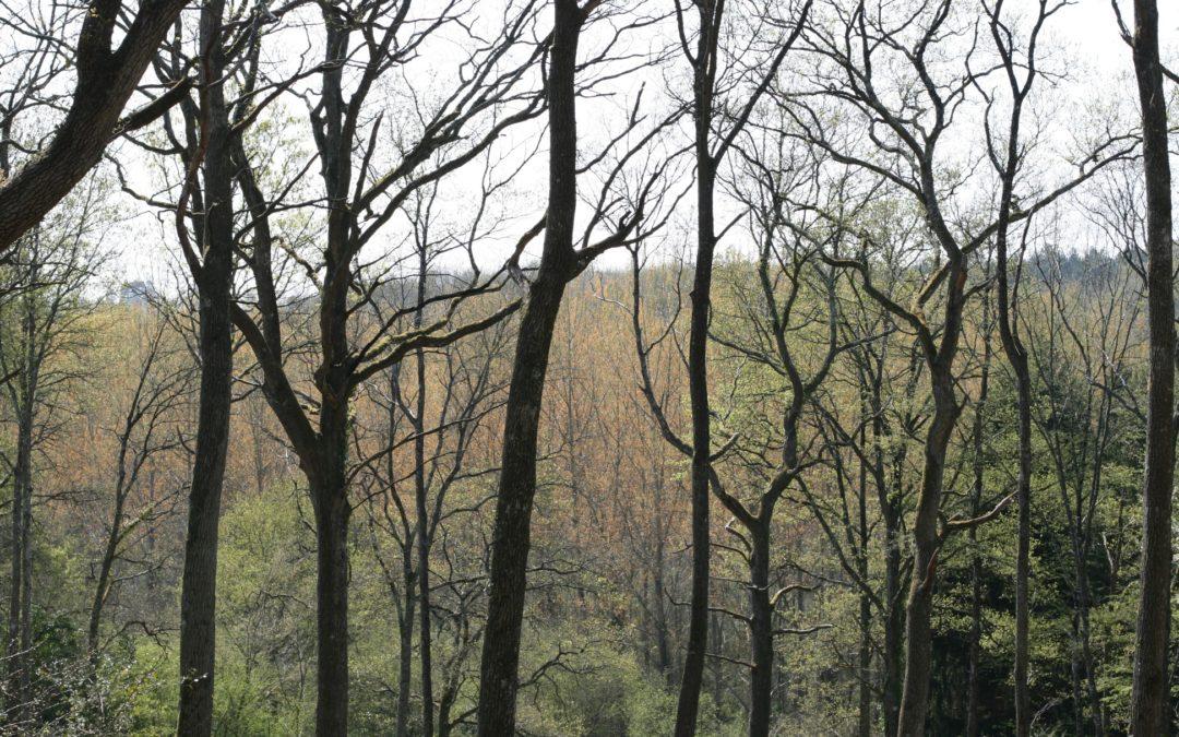 Le bonheur est dans Le bois : La filière Forêt-Bois au Salon International de l'Agriculture