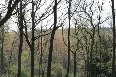 Filière Forêt Bois