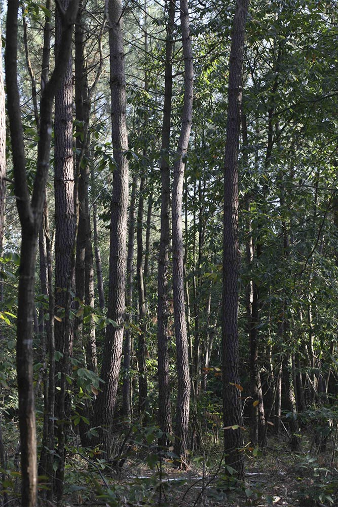 La forêt privée française voit ses aides diminuées