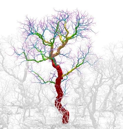 Des scientifiques modélisent la formation des arbres