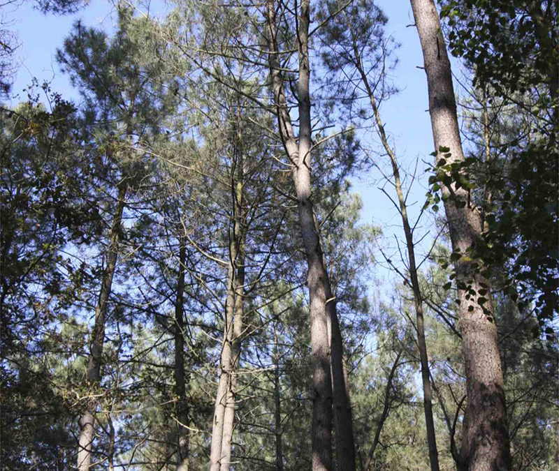 Rapport « L'arbre et la forêt à l'épreuve d'un climat qui change »