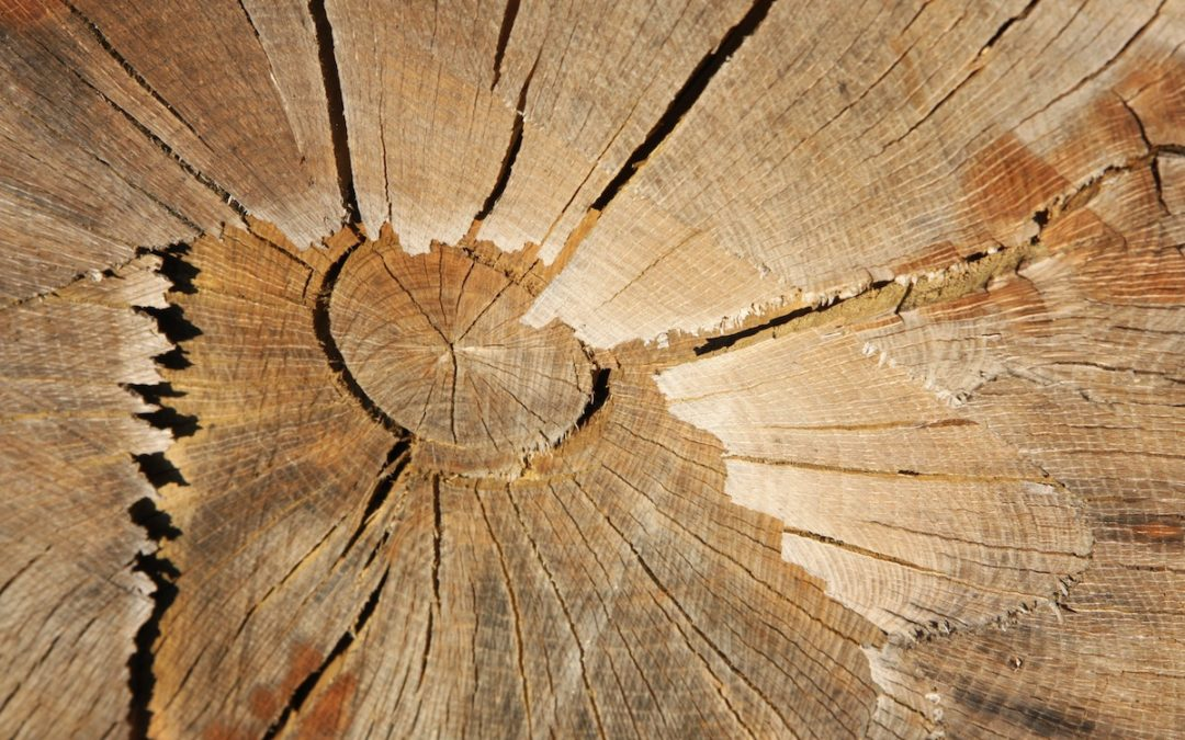 Première charte de contractualisation de la filière bois