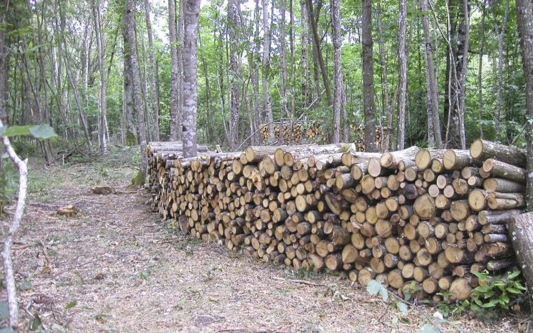 Chauffage au bois : la performance des meilleurs appareils peut être fortement impactée par la qualité du combustible