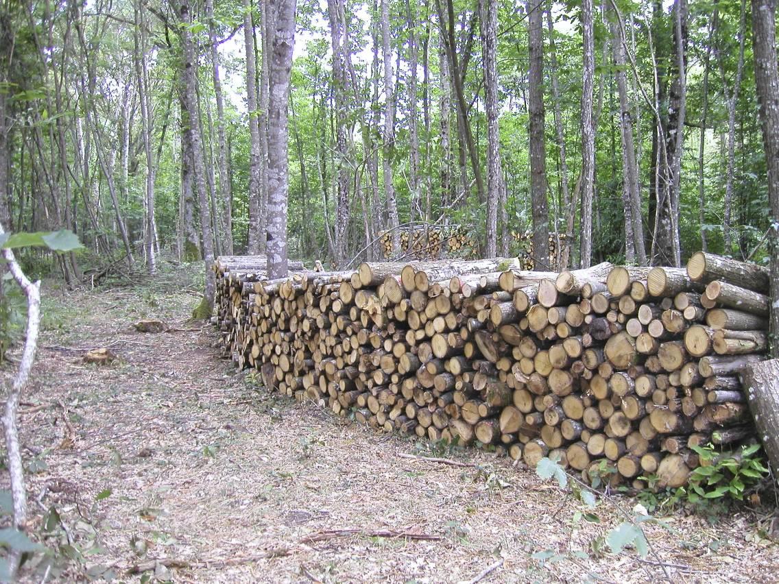 Appel à Manifestations d'Intérêt en faveur d'une plus grande mobilisation du bois
