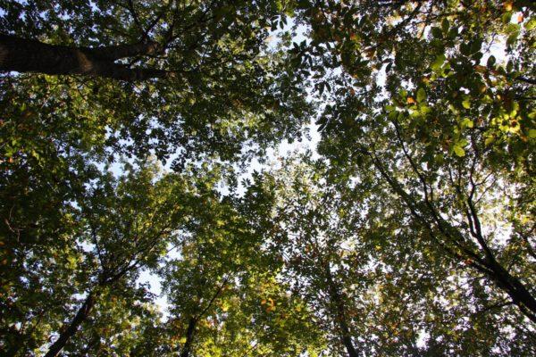 Investir en forêt, c'est rentable