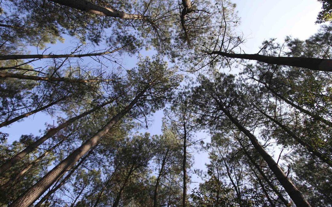 La forêt française pourrait produire un tiers de bois supplémentaire