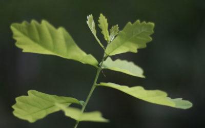 40 % du bois mis sur le marché en France est fourni par l'ONF