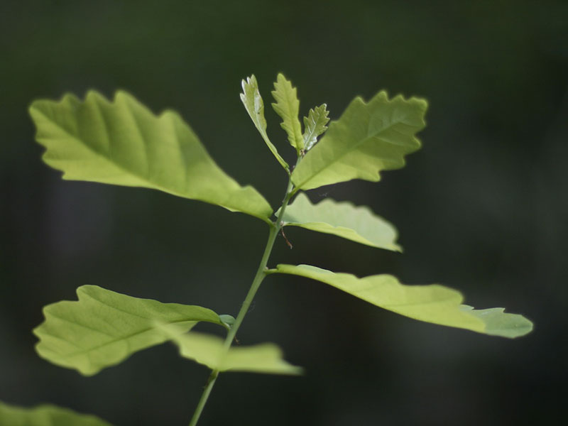 La forêt française produit deux fois plus de bois que ce qui est coupé