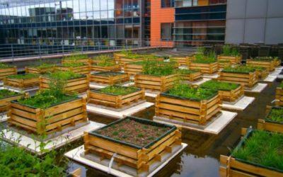 Expérimentation d'un modèle innovant de toiture végétalisée