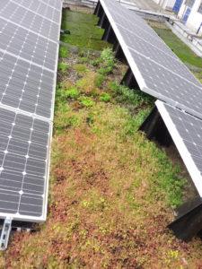 Toiture végétalisée photovoltaïque étanchéité pour toiture terrasse