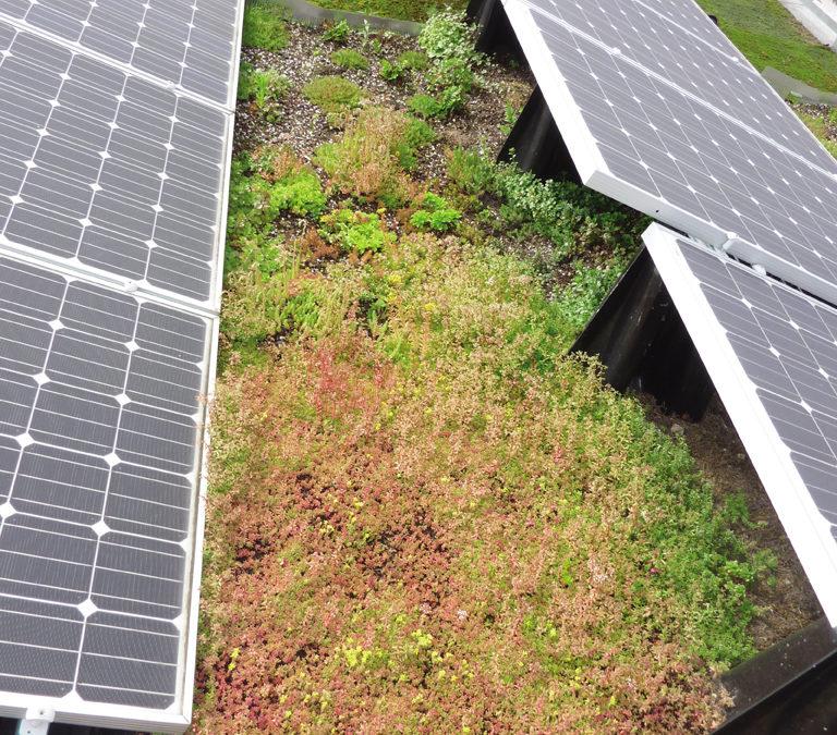 Un système qui combine photovoltaïque, toiture végétalisée et étanchéité