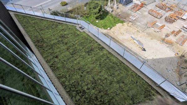 5 heures pour installer 235 m2 de toiture végétalisée